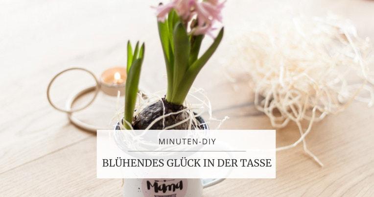 Schnelles und nachhaltige Geschenk zum Muttertag: Topfblume in der Tasse