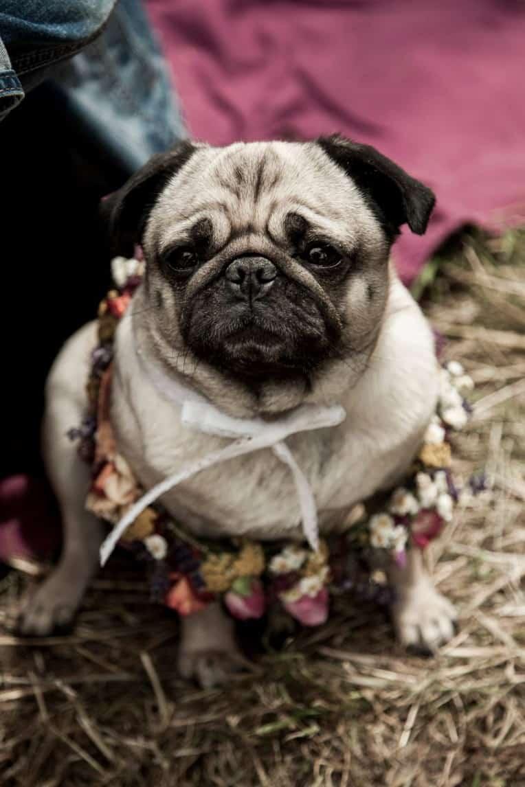 Hochzeitsinspiration: Boho Festival, Mops | marygoesround.de
