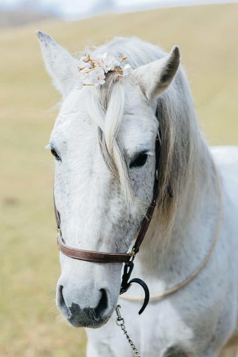 Hochzeitsinspiration: First Love - Märchenhaft heiraten, Hochzeitspferd, Haarschmuck, Mähnenschmuck | marygoesround.de
